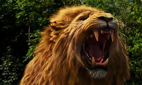 Narnia Lion Images 123 Best Aslan The Great Lion Images On